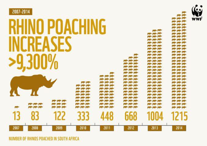 rhino_infographic__sa_1215