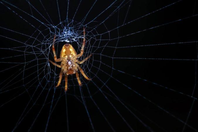 spider-1122440_960_720