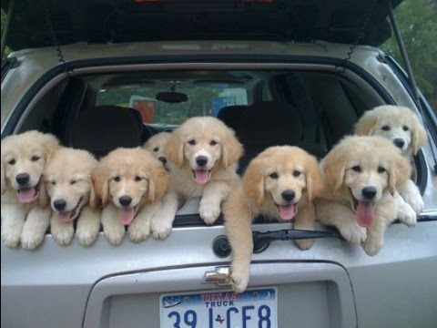 After everything that's happened in the last week, we all deserve a picture of cute puppies.