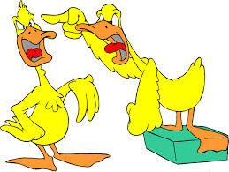arguing duck